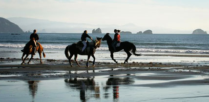Image result for bandon beach riding stables